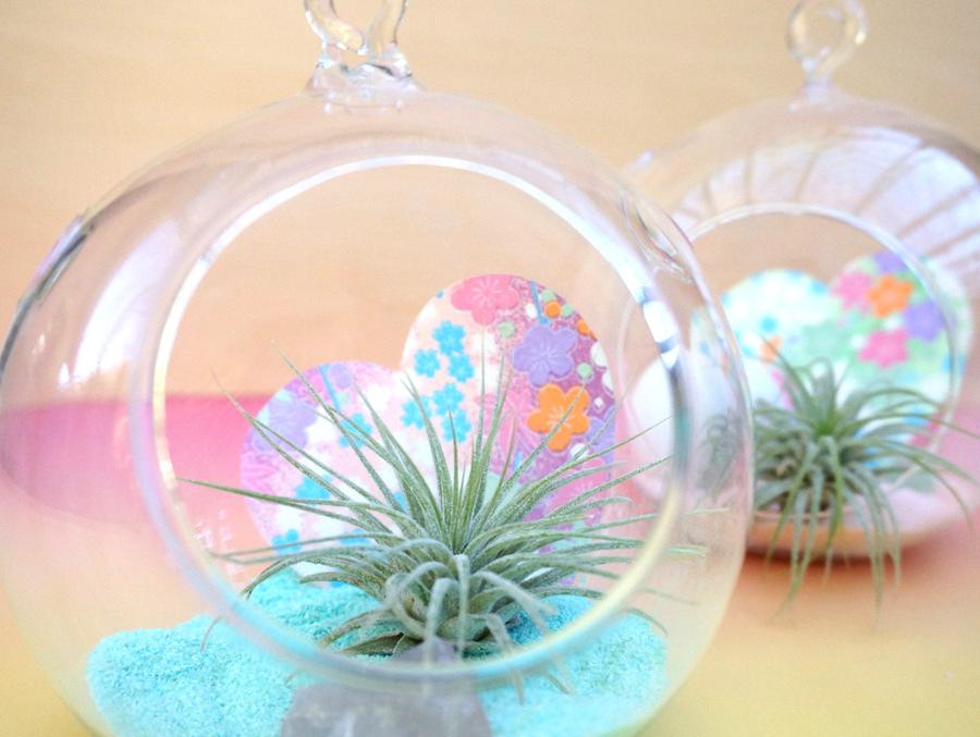 https://www.decoist.com/pastel-air-plant-terrarium/