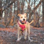 Use Dog-Friendly Interior Design In Your Home