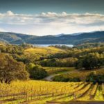 Buehler Vineyards, A Must-See Landscape